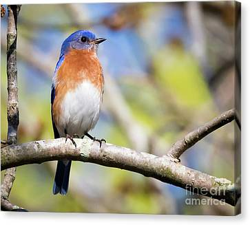 Canvas Print featuring the photograph Blue Bird by Ricky L Jones