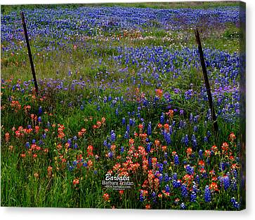 Canvas Print featuring the photograph Bluebonnets #0487 by Barbara Tristan