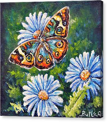 Blue Buckeye Canvas Print
