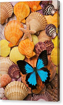 Scallops Canvas Print - Blue Butterfly And Sea Shells by Garry Gay