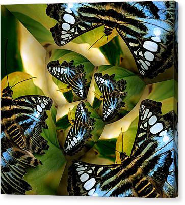 Blue Butterfly Collage Canvas Print by Irma BACKELANT GALLERIES