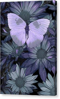 Blue Butterfly Canvas Print by JQ Licensing
