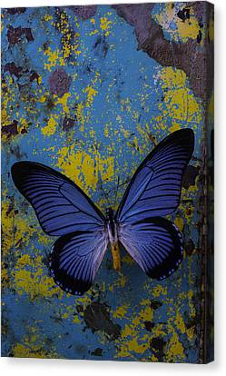 Blue Butterfly On Rusty Wall Canvas Print by Garry Gay