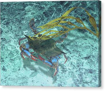 Blue Claw Crab Canvas Print - Blue Claw Swimming by Spadecaller