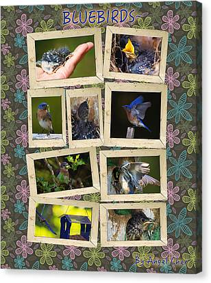 Canvas Print featuring the photograph Blue Collage by Angel Cher