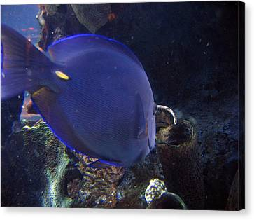 Blue Color Fish Canvas Print