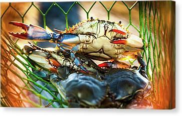 Blue Crab Cha Cha Cha Canvas Print