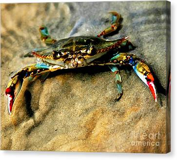 Blue Crab Canvas Print by Joan McCool