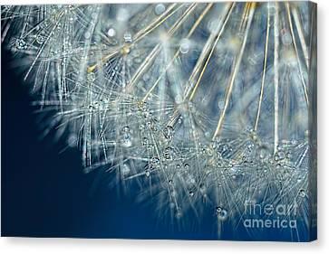 Blue Dandelion Dew By Kaye Menner Canvas Print