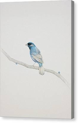 Birds Canvas Print - Blue by Diego Fernandez