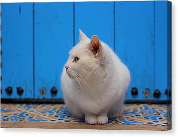 Canvas Print featuring the photograph Blue Door White Cat by Ramona Johnston