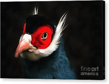 Blue Eared Pheasant Canvas Print