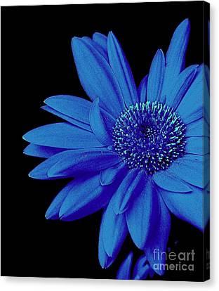 Blue Canvas Print by Elfriede Fulda