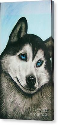 blue eye Husky  Canvas Print by Anastasis  Anastasi