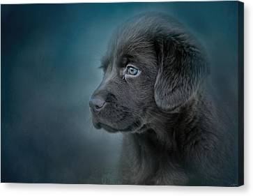 Blue Eyed Puppy Canvas Print by Jai Johnson