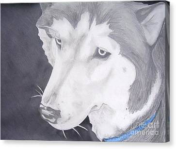 Huskies Canvas Print - Blue Eyes by Sarah Quezada