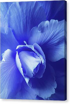 Blue Begonia Canvas Print - Blue Floral Begonia by Jennie Marie Schell