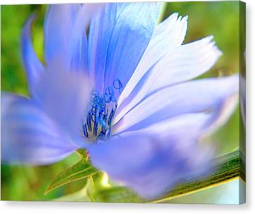 Blue Flower, Sun Light  Canvas Print by Nat Air Craft