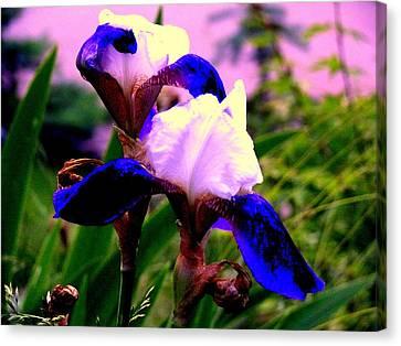 Blue Flowers Canvas Print by Aron Chervin