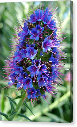 Blue Flowers Canvas Print by Amy Fose