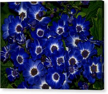 Blue Flowers Canvas Print by Laura Allenby