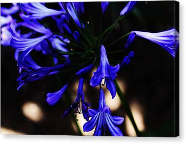Canvas Print - Blue Flowers by Magdalena Green