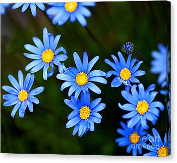 Blue Flowers Canvas Print by Wingsdomain Art and Photography