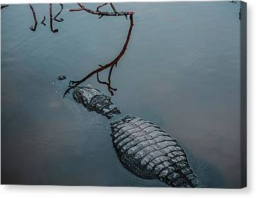 Blue Gator Canvas Print