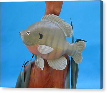 Blue Gill Canvas Print by Jack Murphy