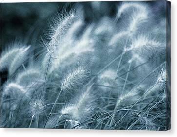 Blue Gras Canvas Print