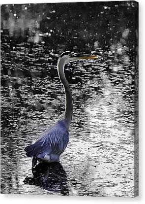 Blue Heron 2008 Canvas Print