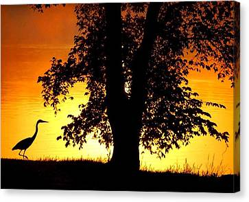 Canvas Print featuring the photograph Blue Heron At Sunrise by Sumoflam Photography