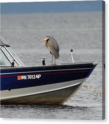 Blue Heron Boat Ride Canvas Print