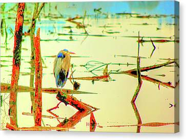 Canvas Print featuring the photograph Blue Heron by Dale Stillman