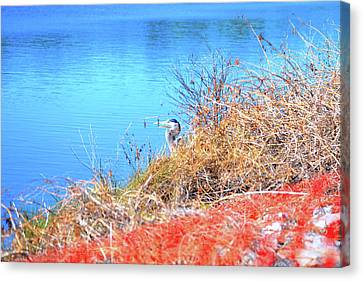 Blue Heron In Hiding Canvas Print by Marilyn Holkham