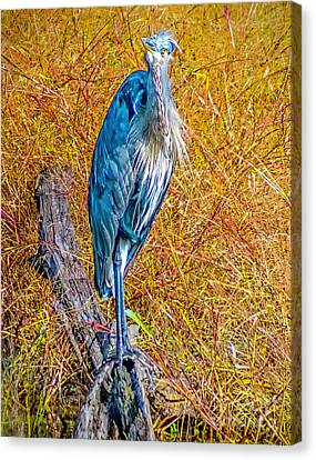 Canvas Print featuring the photograph Blue Heron In Maryland by Nick Zelinsky