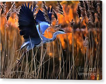 Blue Heron Canvas Print by Jack Torcello