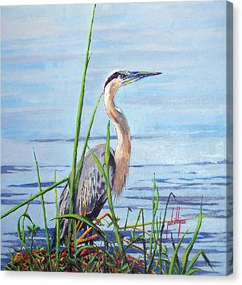 Canvas Print featuring the painting Blue Heron by Jim Phillips