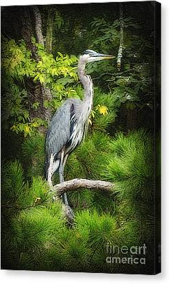 Canvas Print featuring the photograph Blue Heron by Lydia Holly