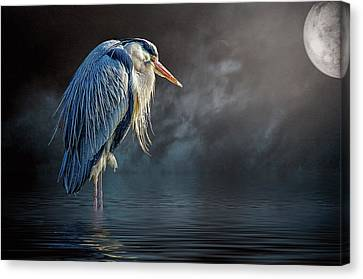 Blue Heron Moon Canvas Print by Brian Tarr