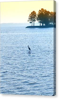Blue Heron On The Chesapeake Canvas Print by Bill Cannon