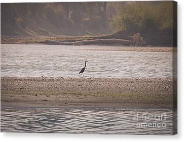 Blue Heron On The Yellowstone Canvas Print