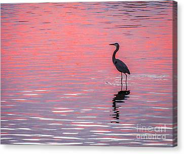 Blue Heron - Pink Water Canvas Print by Tom Claud