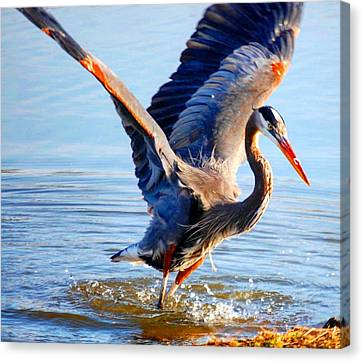 Canvas Print featuring the photograph Blue Heron by Sumoflam Photography