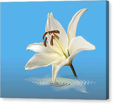 Blue Horizons - White Lily Canvas Print