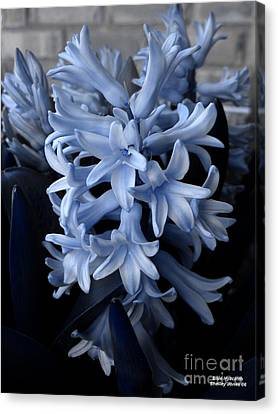 Blue Hyacinth Canvas Print