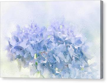 Painted Details Canvas Print - Blue Hydrangea Light by Terry Davis