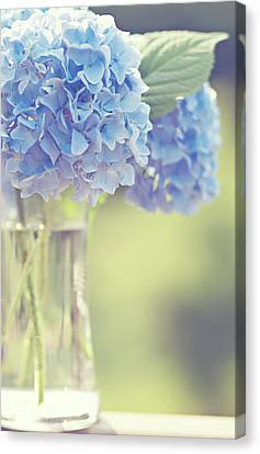 Focus On Foreground Canvas Print - Blue Hydrangea by Photography by Angela - TGTG