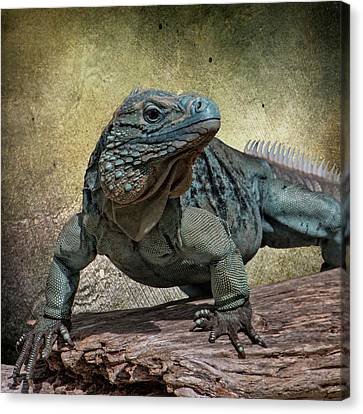 Blue Iguana Canvas Print