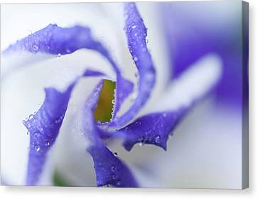 Blue Inspiration. Lisianthus Flower Macro Canvas Print